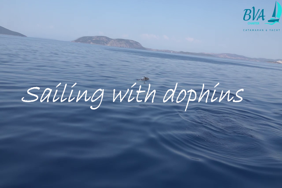Плавайте с делфини в Гърция